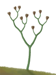 Cooksonia, the earliest vascular plant, middle Silurian